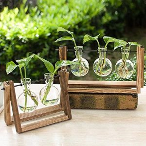 Ivolador Desktop Glass Planter Bulb Vase with Retro Solid Wooden Stand