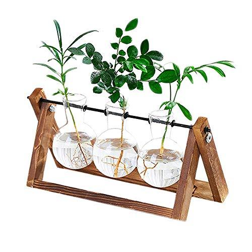 Plant Terrarium Wooden Stand, Desktop Glass Planter Bulb Vase
