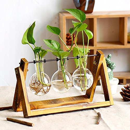 Plant Terrarium with Wooden Stand, Air Planter Bulb Glass Vase Metal
