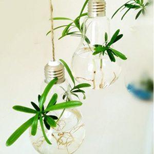 EssenceLiving 3 Light Bulb Shape Plant Terrariums Hanging Glass Vase