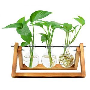 Bulb Glass Planter Vase Terrarium Hydroponics Desktop Planter Vase Holder