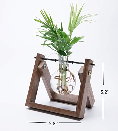 Cyan Shirt Glass Planter Bulb Vase with Walnut Wooden Stand Metal