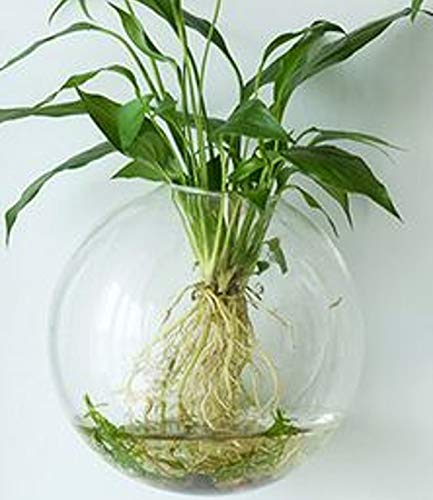 6-Pack Wall Hanging Planters Glass Terrariums - Round Air Plants Wall Containers