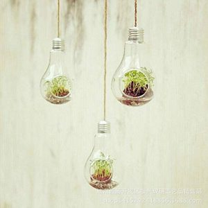 Binwwede Light Bulb Hanging Glass Planter Round Air Plant Terrarium Home