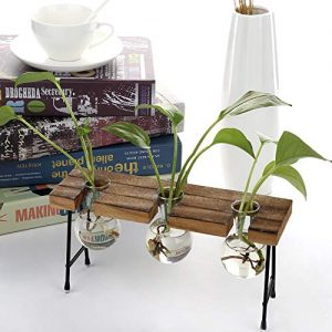 TiTa-Dong Hydroponic Plant Vases with Wooden Stand
