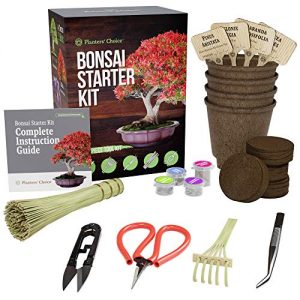 Bonsai Starter Kit + Tool Kit - The Complete Kit to Easily Grow