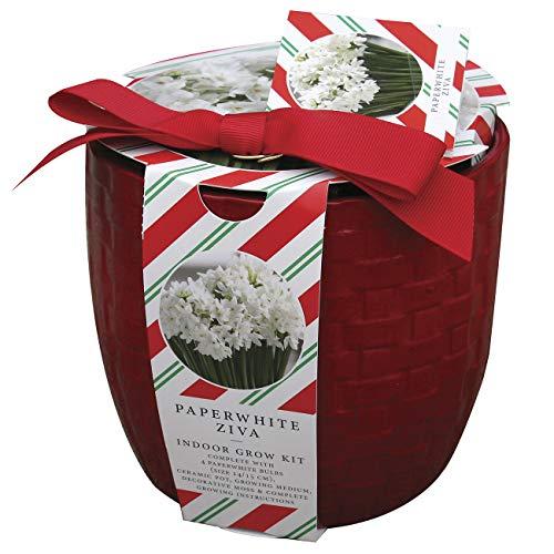 Van Zyverden Farm House Red Paperwhite Kit Basket Weave Ceramic Planter