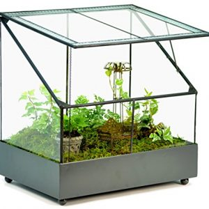 H Potter Terrarium Wardian Case Plant Container Succulent Planter Fairy Garden