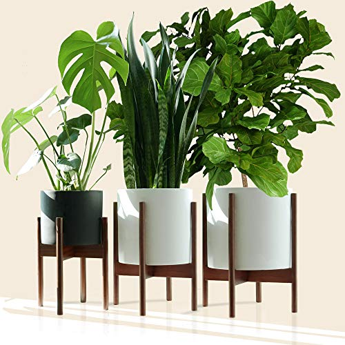 "Fox & Fern - Multi-Tiered Plant Stands - Set of 3-8""/10""/12"" - Acacia Wood"