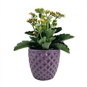 Better-way Diamond Round Ceramic Orchid Flower Container Succulent Planter