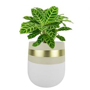 Large Plant Pot Ceramic Planter - White & Beige Planter Pot with Gold Detailing