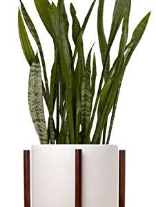 "Indoor Planter Large 9"" Pot for Plants with Mid Century Modern Wooden Stand"