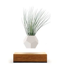 LYFE - Original, Authentic Floating Levitating Plant Pot for Air Plants