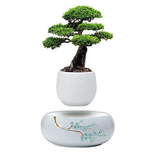 Active Gear Guy Levitating Mini Plant Pot with Japanese Style Design