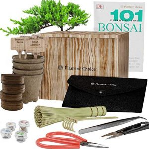 All-in-One Premium Bonsai Tree Kit + 101 Essential Tips Book and Complete Tool kit - in Unique Wooden Gift Box - Easily Grow 4 Trees from Seed - Bonsai Planting Starter Kit - Gardening Gifts